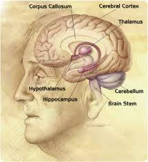 Η πρόληψη της Νόσου Alzheimer